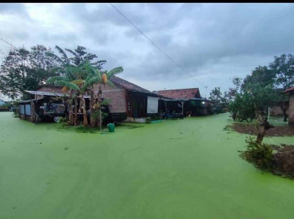 Viral Banjir Berwarna Hijau di Pekalongan, Ternyata Ini Sebabnya