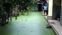 Heboh Air Banjir di Pekalongan Berwarna Hijau, Kok Bisa?