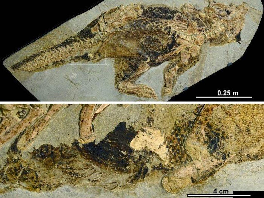 Ilmuwan Ini Meneliti Pantat Dinosaurus, Eh Bagaimana?
