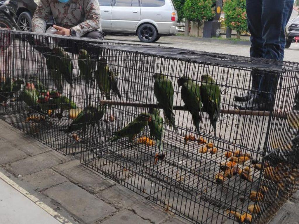 Jual Satwa Dilindungi Lewat Facebook, PNS di Pemprov Riau Ditangkap