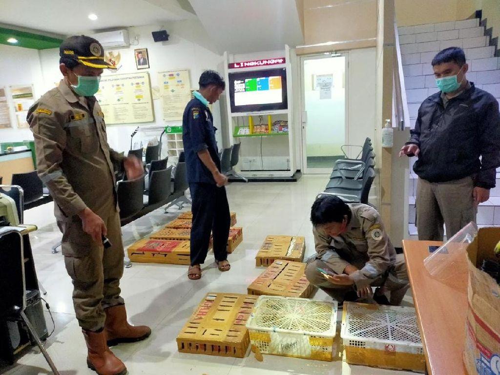 Penyelundupan 380 Burung Asal NTT ke Surabaya Digagalkan