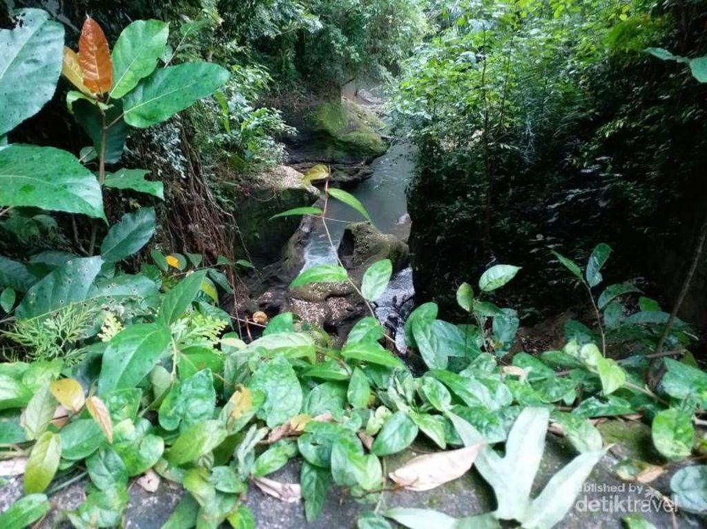 Treking Sambil Nikmati Alam di Bukit Campuhan, Bisa!
