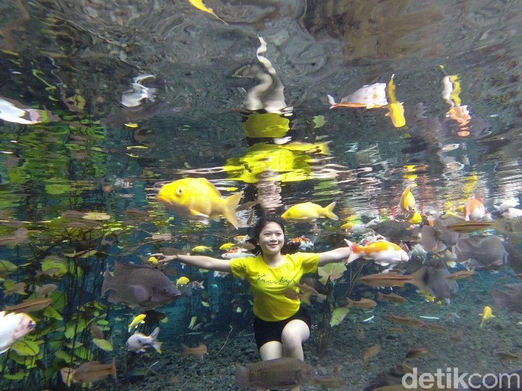 Foto: Asyik Selfie Underwater Bareng Ikan di Lumajang
