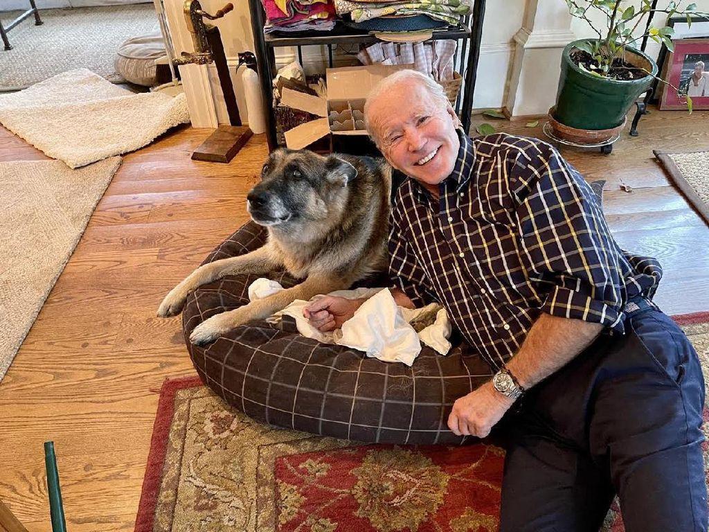 Momen Anjing Peliharaan Joe Biden Pindah ke Gedung Putih