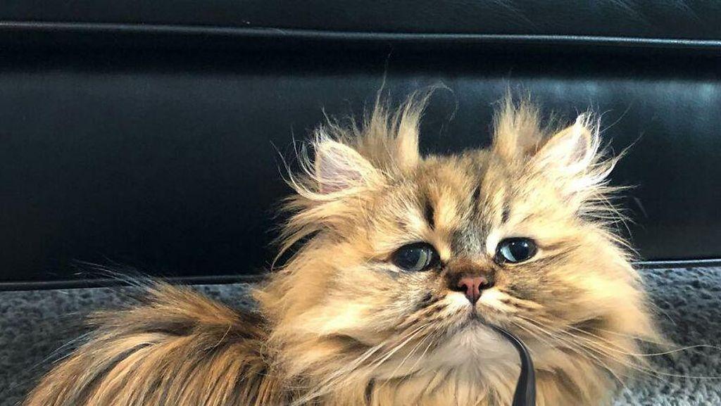 Potret Barnaby, Kucing yang Selalu Mengantuk