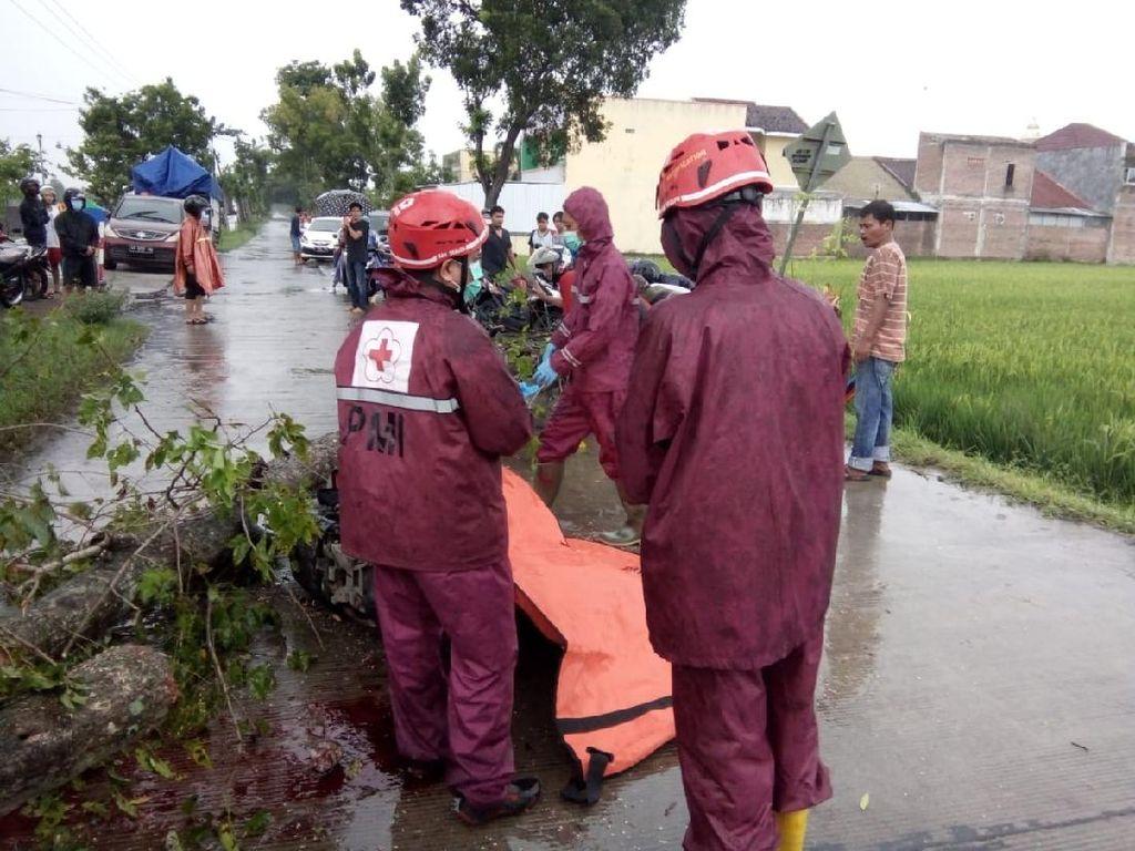 Seorang Pemotor Tewas Tertimpa Pohon Tumbang di Sragen