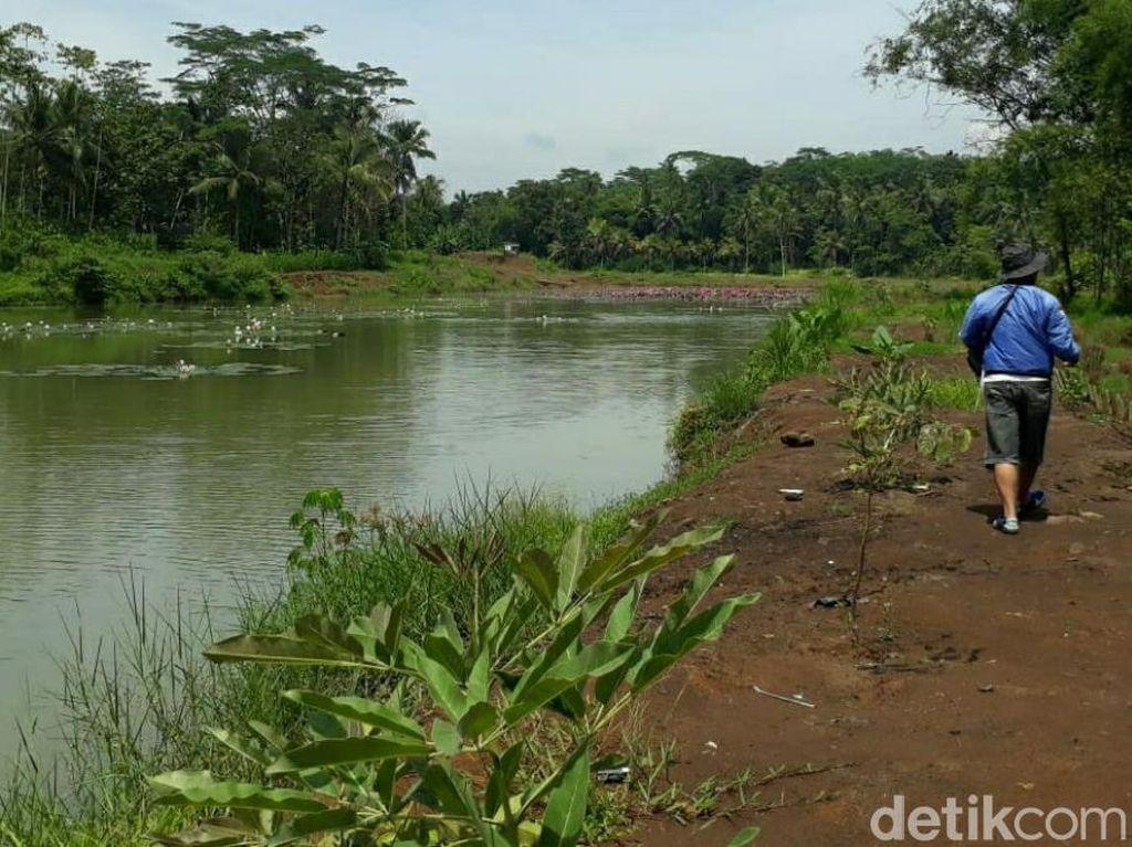 Cerita Siluman Ikan Gabus di Situ Bojongmengger Ciamis