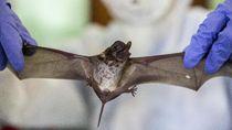 Lab Wuhan Diduga Ajukan Paten Pembiakan Kelelawar Sebelum COVID-19 Merebak