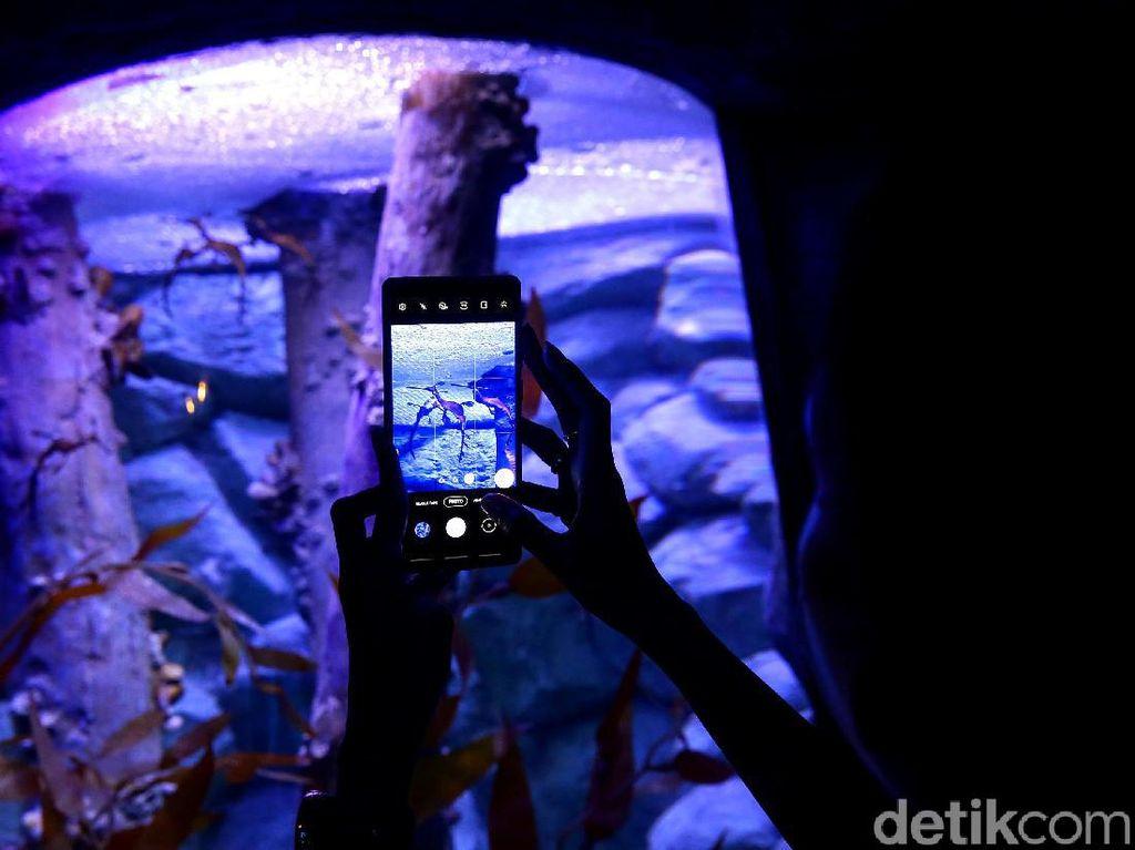 Berkenalan dengan Dua Penghuni Baru Jakarta Aquarium