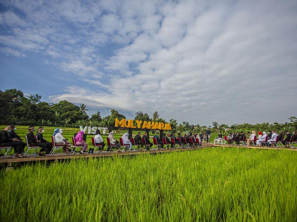 Yuk Tanam Padi dan Selfie Tengah Sawah di Kampung Ciharashas Bogor