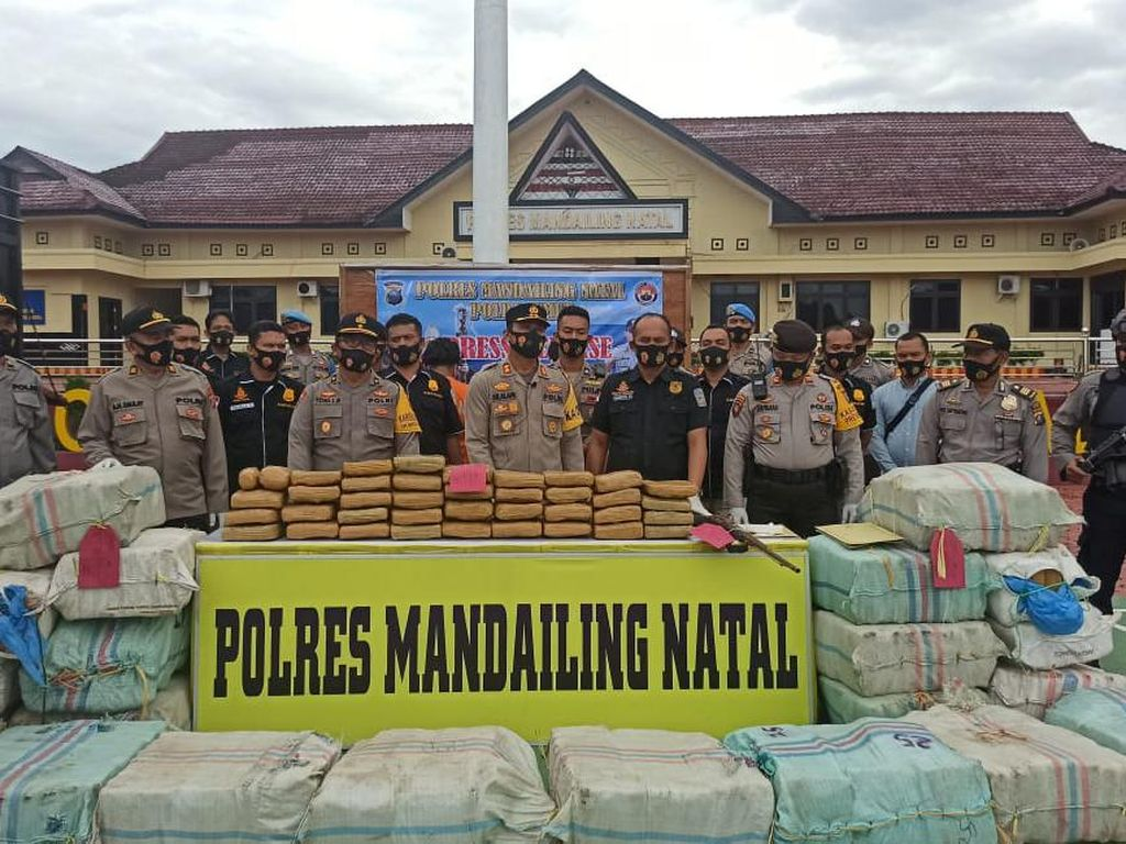 Polisi Tangkap 3 Orang Terkait Narkoba di Madina, 570 Kg Ganja Disita
