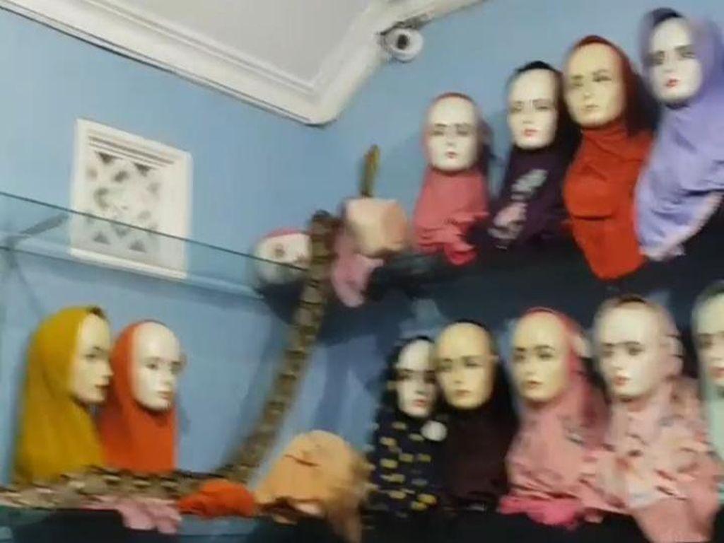 Ular Piton Gerayangi Manekin Toko Jilbab di Blitar