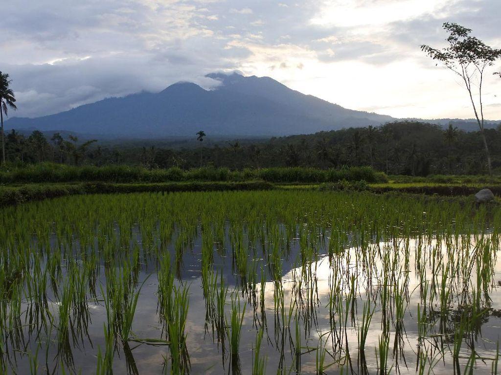 Aktivitas Gunung Raung: Sekali Gempa Tremor, Asap Kawah Tipis-Sedang