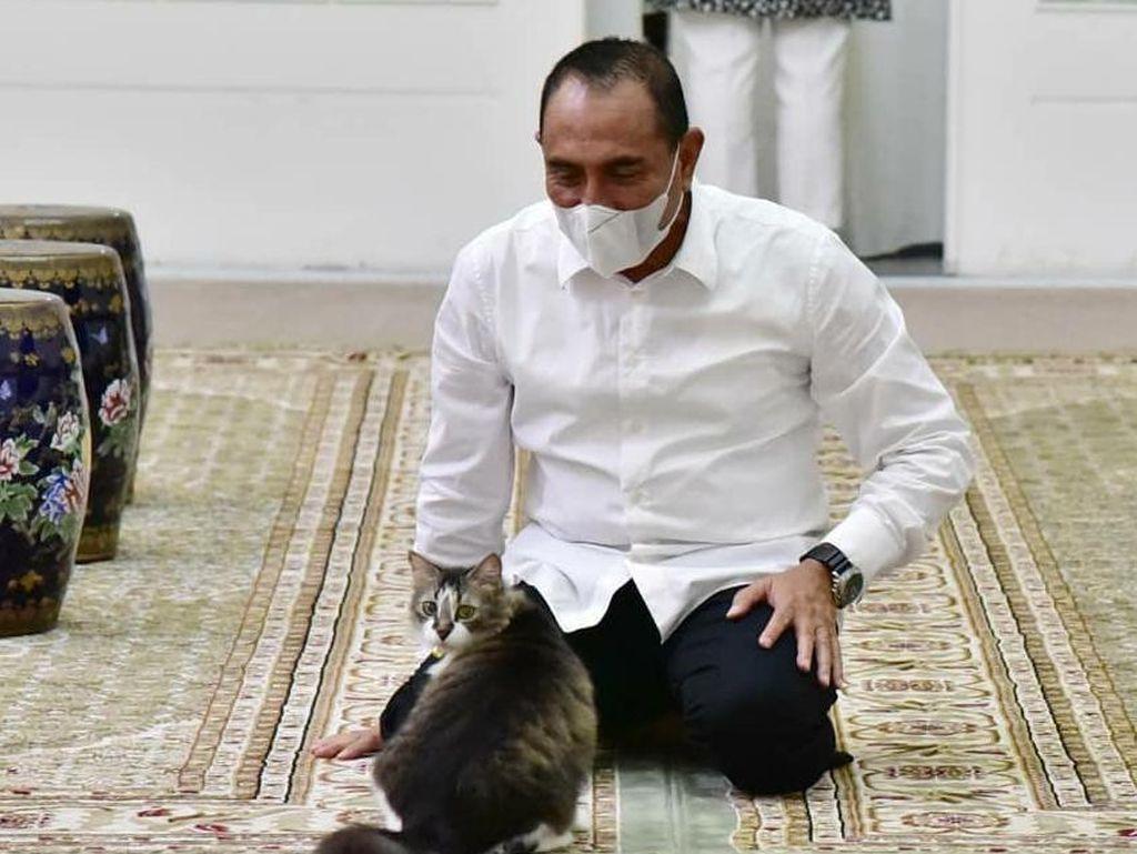 Gubsu Edy Berang Ada Rumah Jagal Kucing: Bukan untuk Konsumsi!