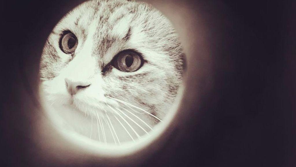 Gemas! Trik Foto Kucing dan Anjing Seperti Rembulan