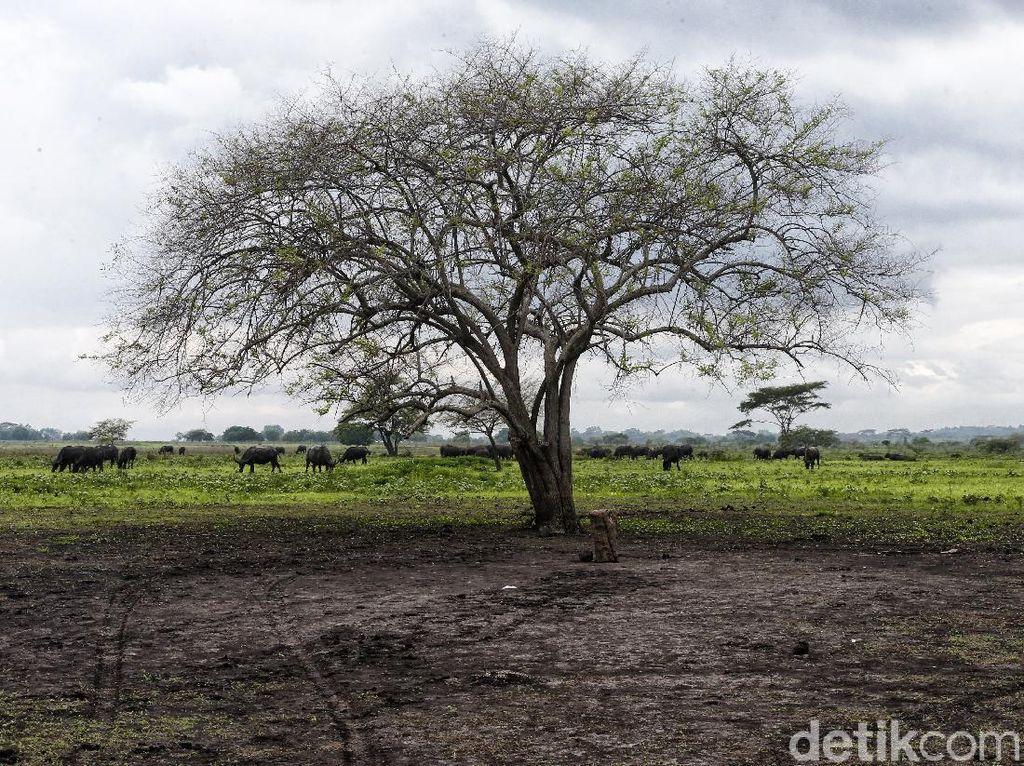 Panorama Africa van Java di Taman Nasional Baluran