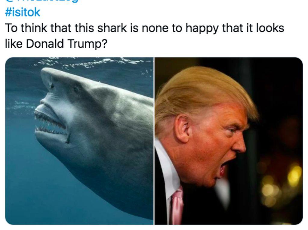Viral! Ada Hiu Mirip Donald Trump