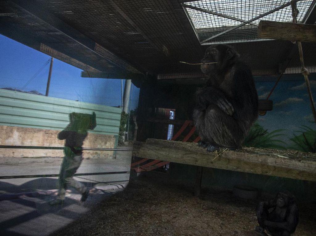Dihantam Pandemi, Kebun Binatang Yunani Terancam Tutup
