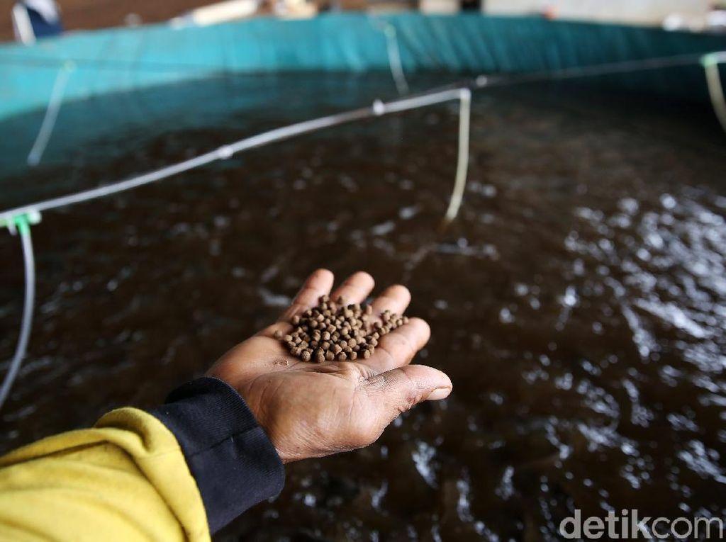 Tips Cari Modal Buat Bisnis Budidaya Ikan