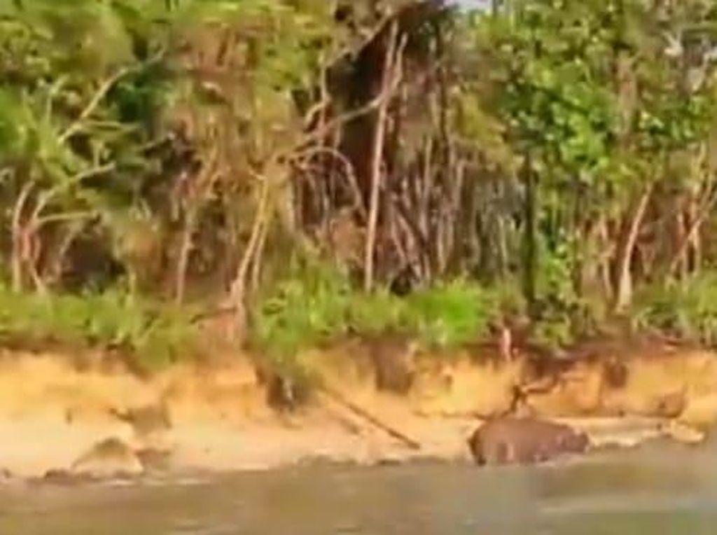 Momen Langka Badak Jawa, Penumpang Ditegur Karena Berbaju Terbuka