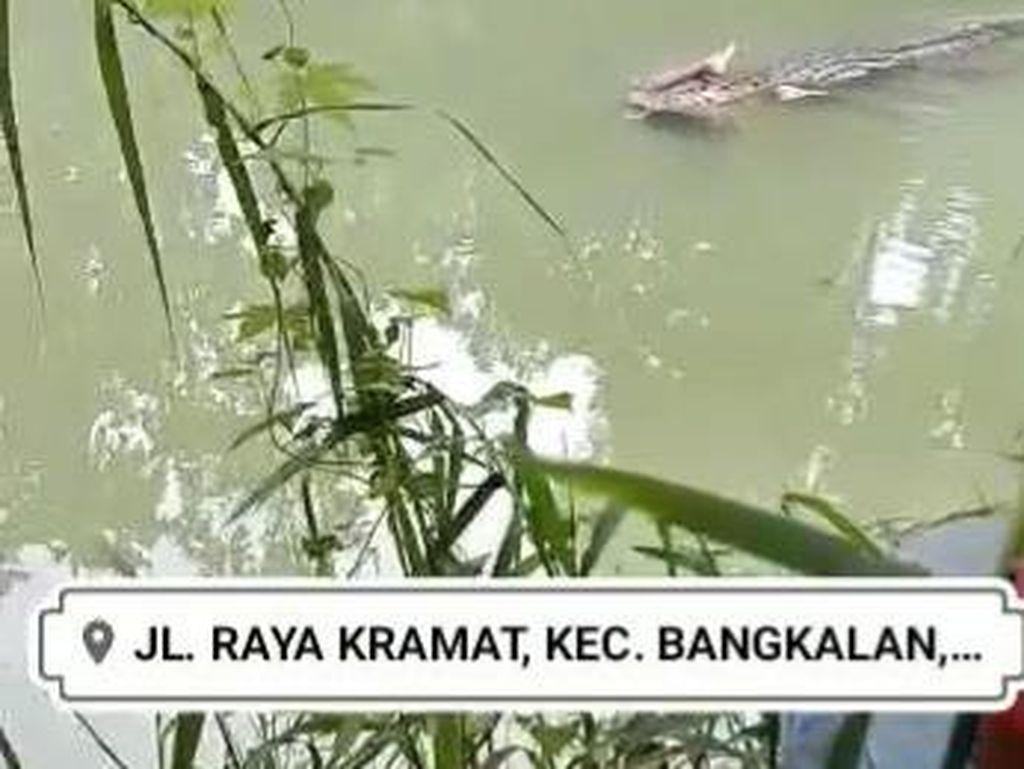 Viral Video Buaya Memangsa Manusia di Bangkalan, Polisi: Hoaks