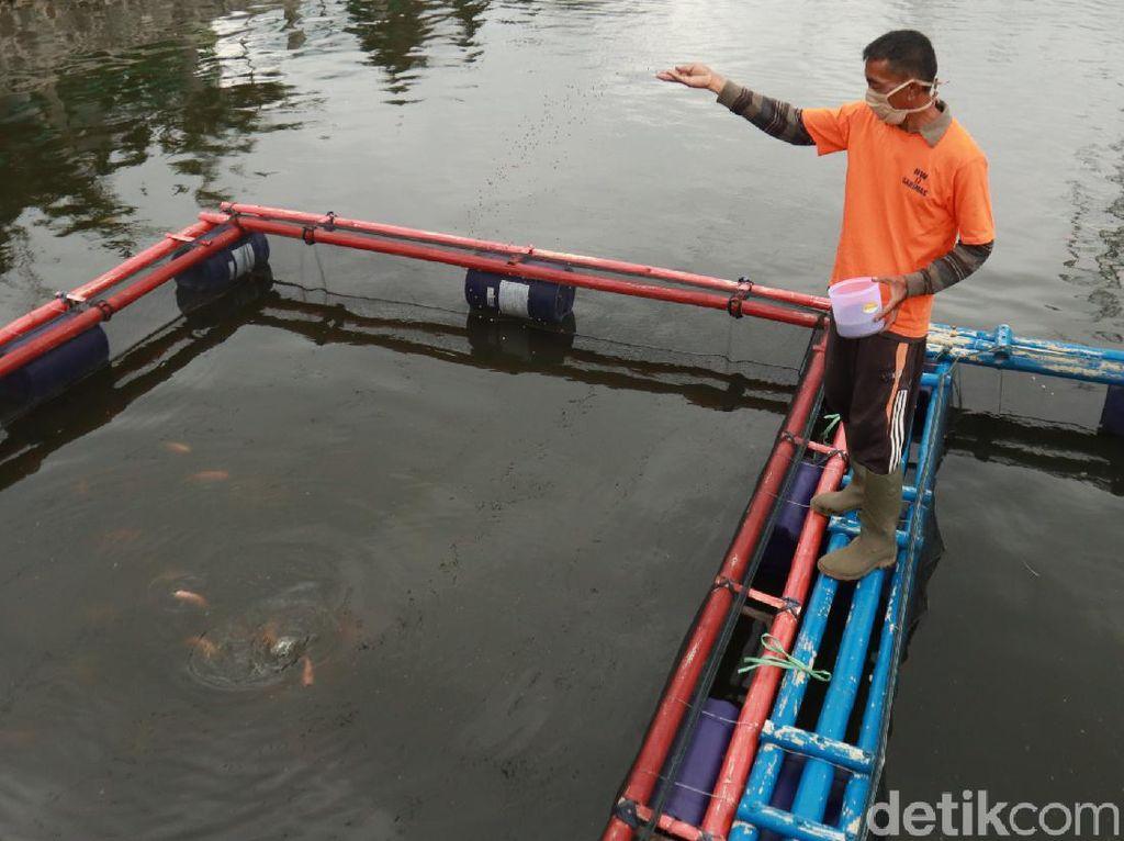 Kreatifnya Warga Bandung, Ubah Kolam Retensi untuk Budidaya Ikan dan Wisata
