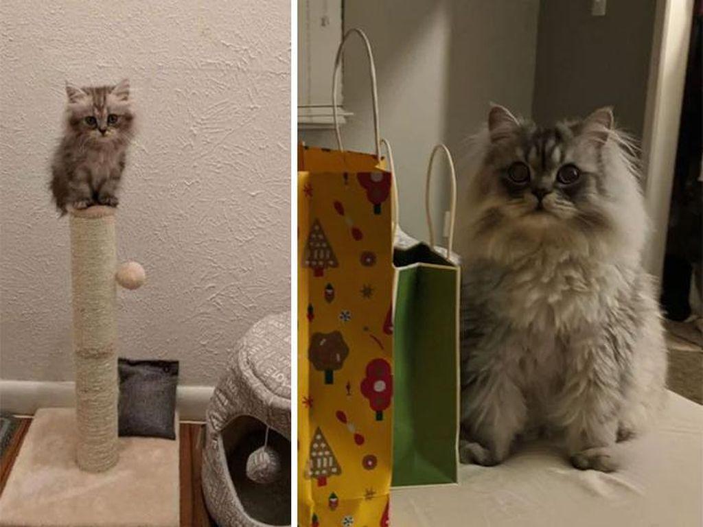 Super Gemas! Potret Before After Versi Kucing
