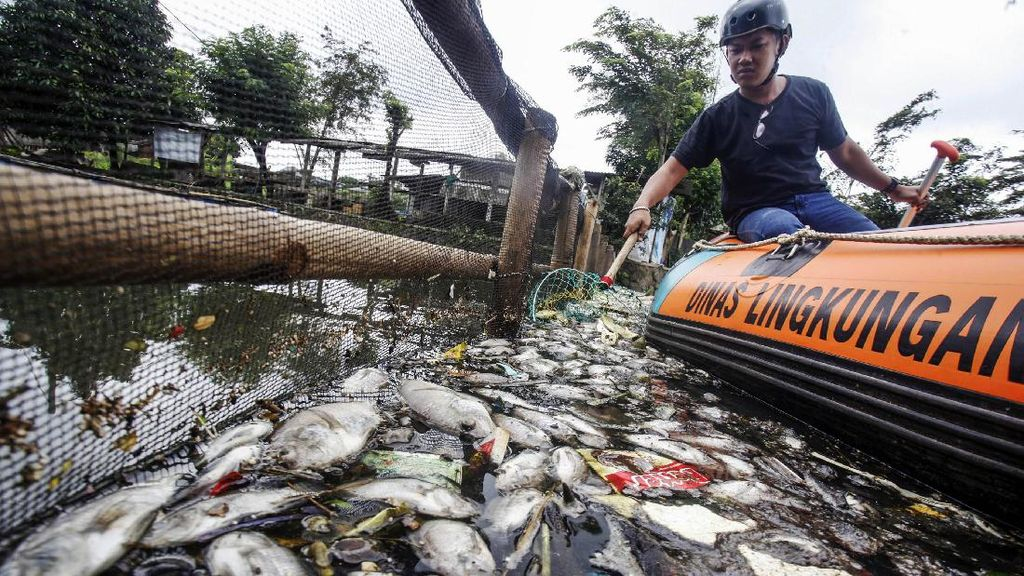 Penampakan Ikan yang Mati Mendadak di Setu Citongtut Bogor