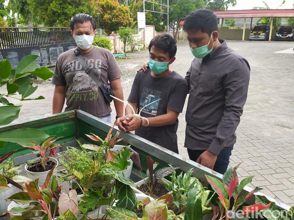 Pria di Lamongan Curi Bunga Hingga Senilai Belasan Juta Rupiah