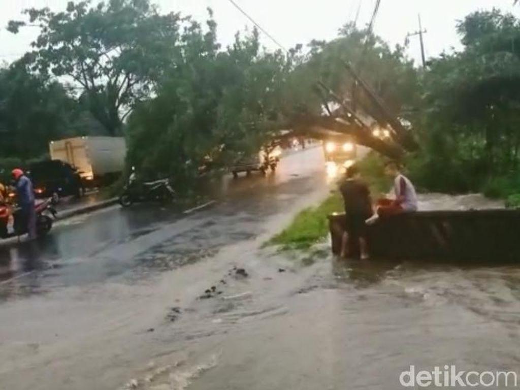 Butuh 3 Jam Evakuasi Pohon Tumbang di Pasuruan, Jalur Malang-Surabaya Lancar