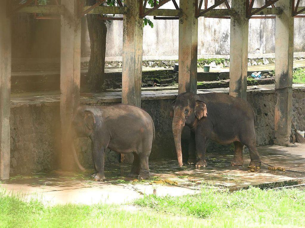 Keseruan Beri Makan Gajah di Solo Zoo