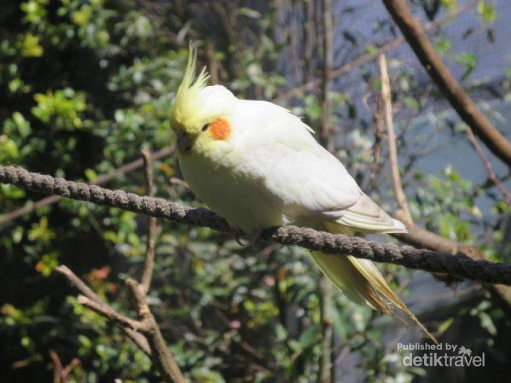 Bertemu Burung-Burung Cantik di Bandung