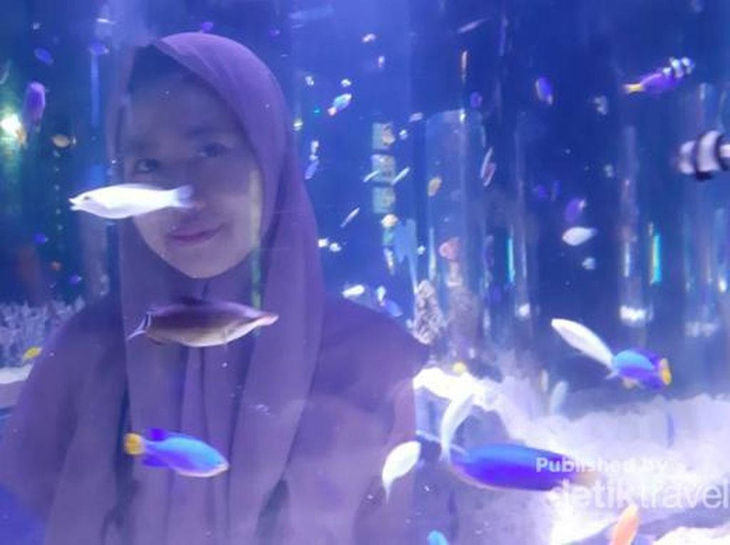 Cuma di Jakarta, Ada Akuarium Cantik Tapi di Dalam Mal
