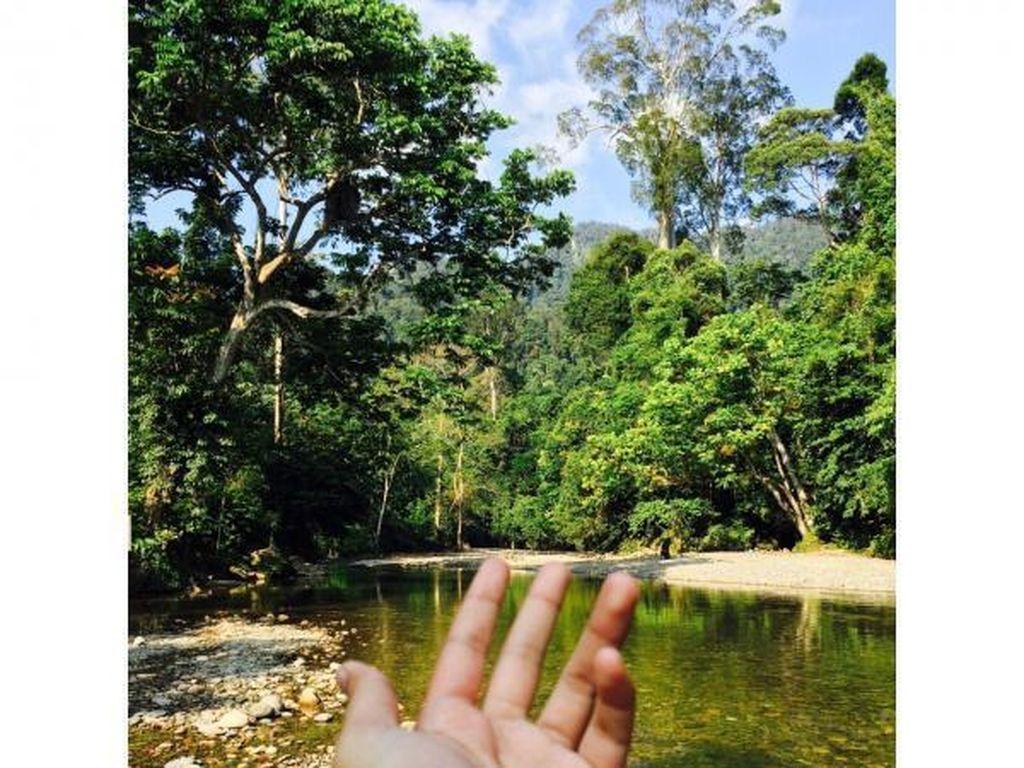 Menaklukkan Alam Liar di Tangkahan, Sumatera Utara