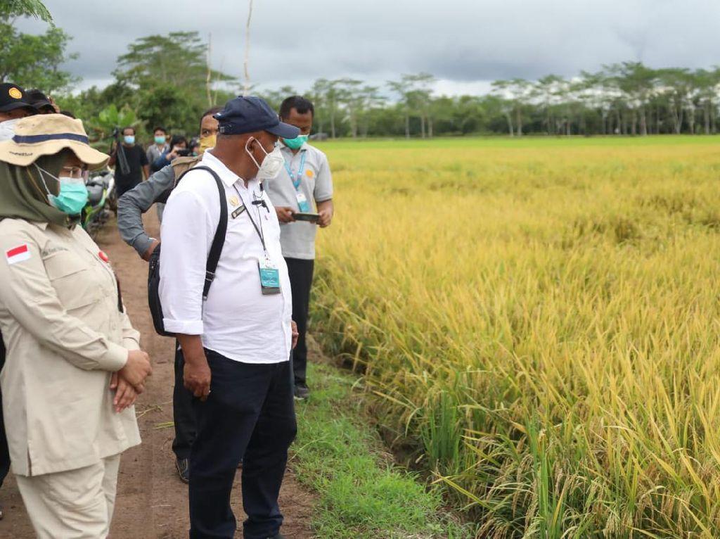 Food Estate Kalteng Dinilai Dongkrak Produksi Padi hingga 1-2 Ton/Ha