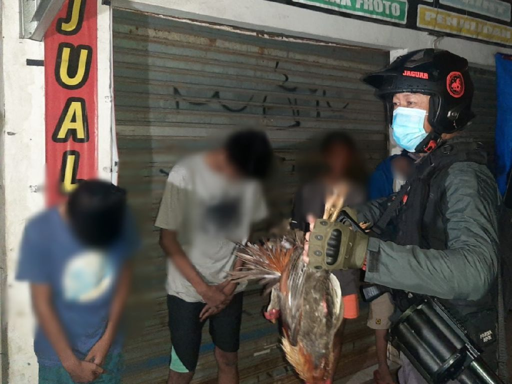 4 Bocah di Depok Ketahuan Curi Ayam, Polisi: Buat Main Game-Beli Miras