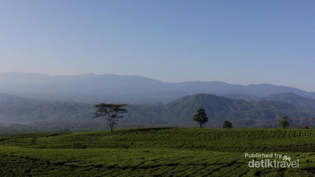 Permadani Hijau di Kaki Gunung Dempo, Sumsel
