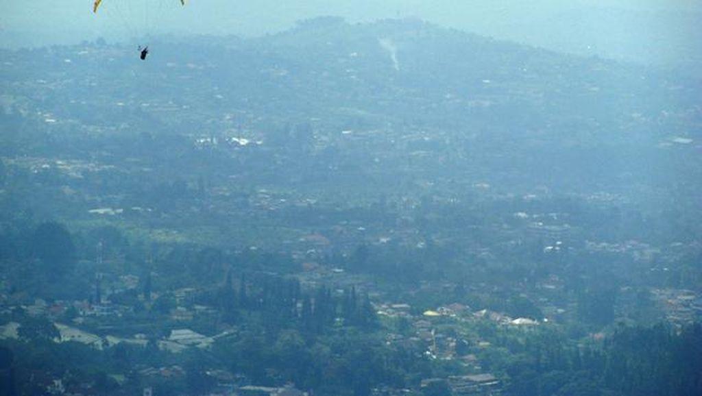 Pesona hijau hutan teh dari udara