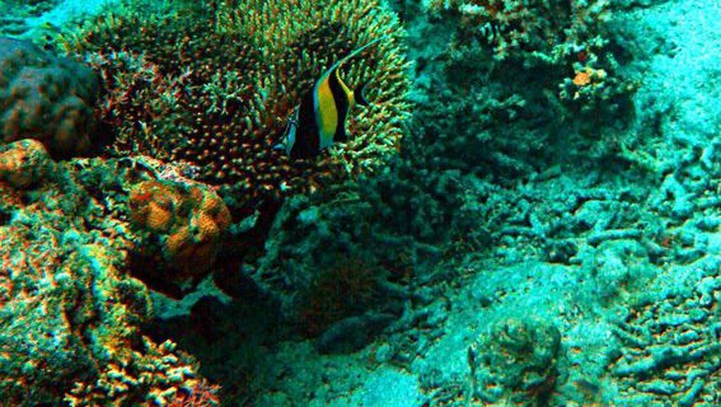 Pulau Moyo : Keindahan Tersembunyi di Utara Sumbawa