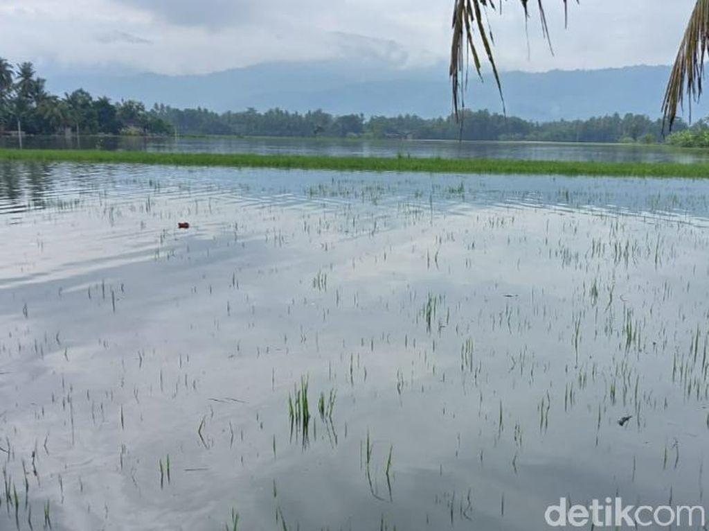 1.074 Hektare Lahan Tanaman Padi di Klaten Terendam Banjir