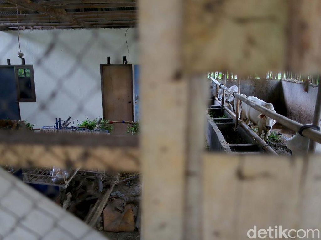 Komplet! Bermain Sambil Belajar di Kampung Tematik Mulyaharja, Bogor