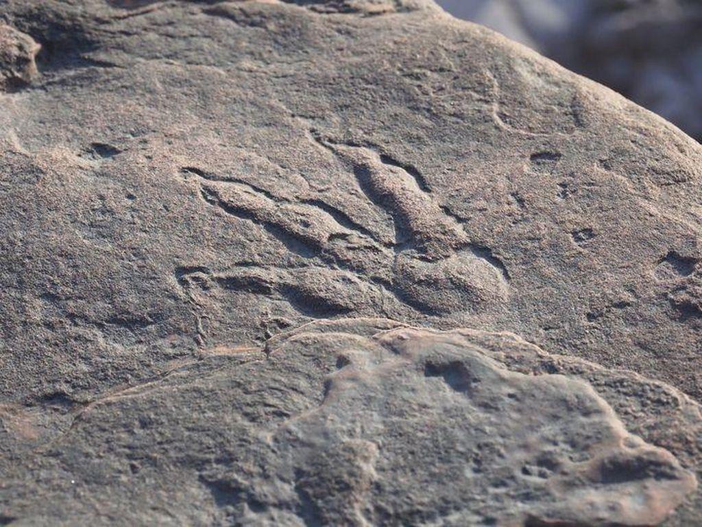 Bocah 4 Tahun Temukan Jejak Kaki Dinosaurus
