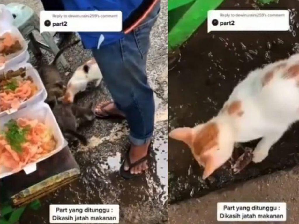 Viral Video Tukang Bubur Disambut Kucing Liar Saat Hendak Berjualan