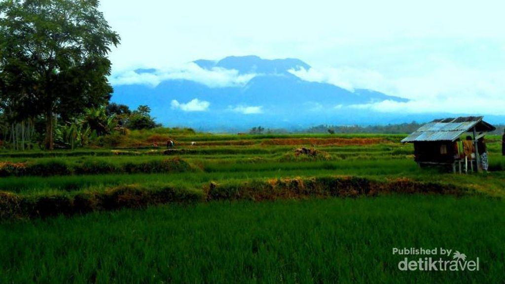 Hijaunya Pedesaan di Minangkabau