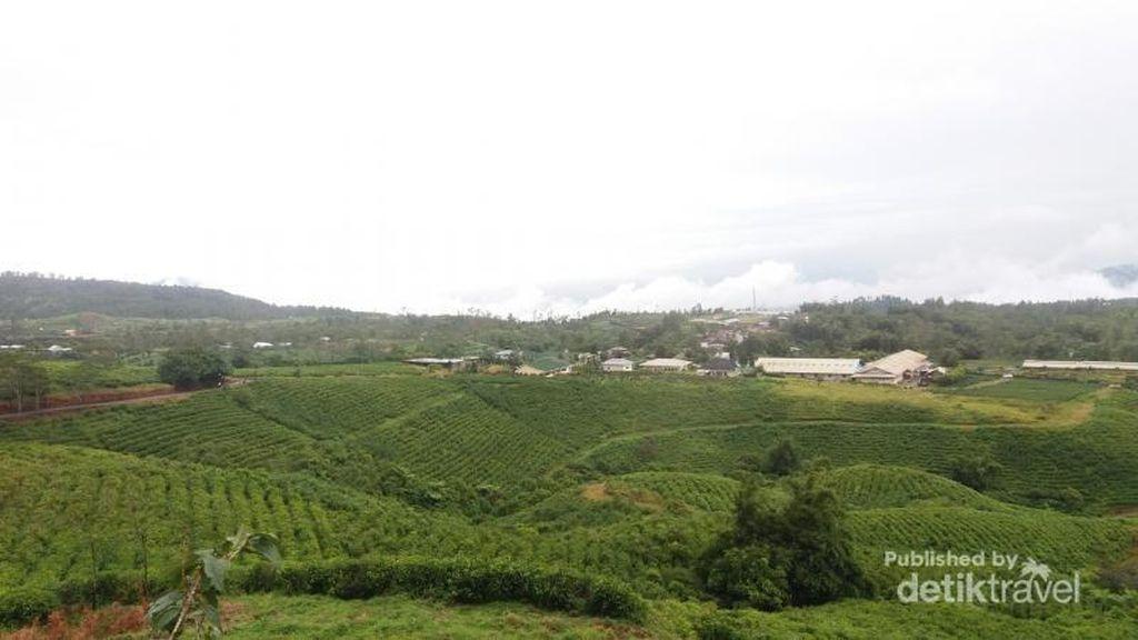 Puncak di Jawa Barat? Bukan, Ini Dekat Makassar