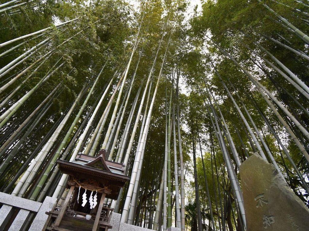 Hutan Terlarang Jepang, Masuk Sini Bisa Hilang