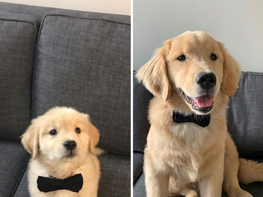 Potret Anjing Bergaya Before-After yang Bikin Gemas