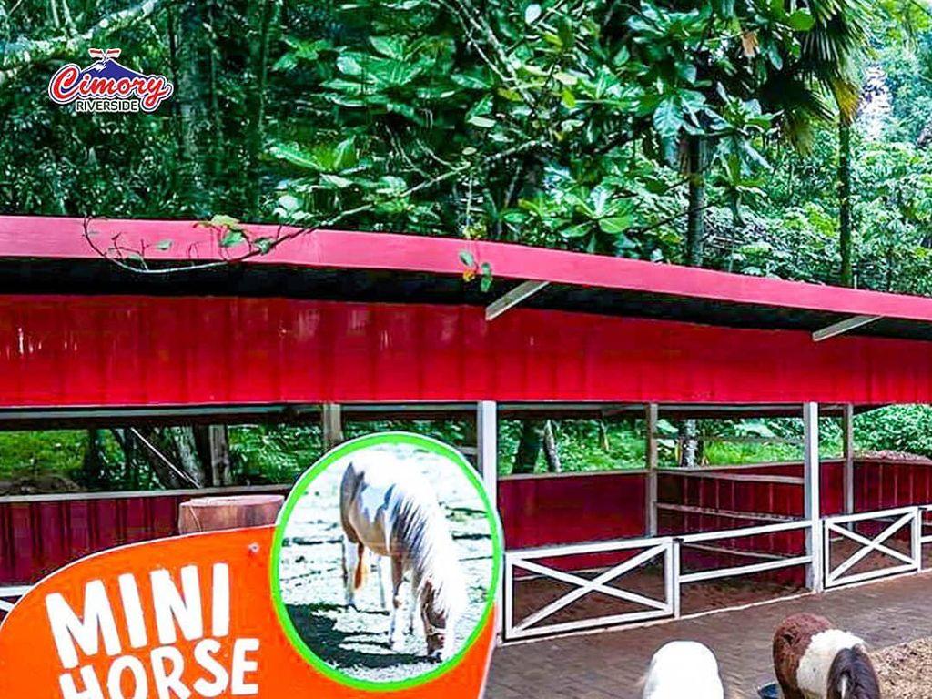 Bertemu Hewan-Hewan Menggemaskan di Cimory Riverside Puncak