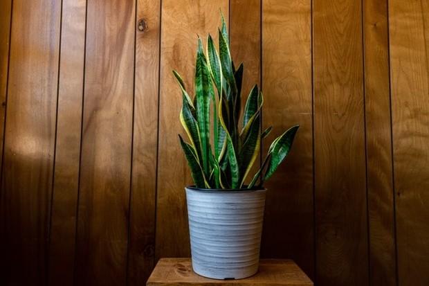 Bunga atau tanaman hias dapat jadi hadiah yang bagus buat ibu mertua.