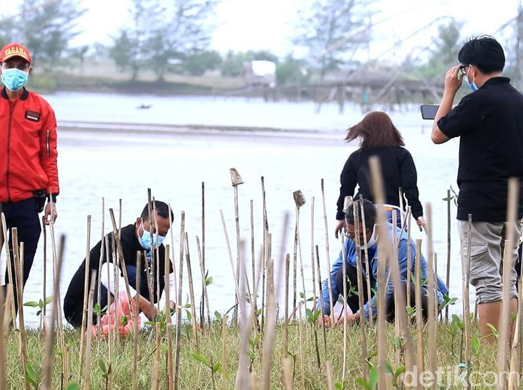 Peringati Hari Pers Nasional, Wartawan Pangandaran Tanam Mangrove